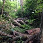 自然豊かな人工林の間伐材
